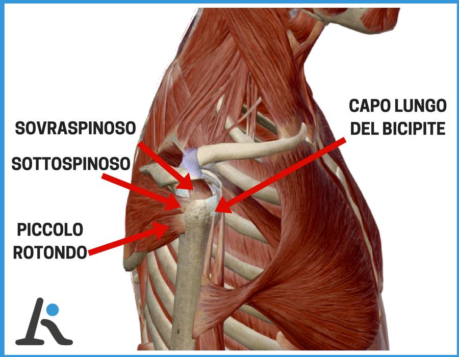 strutture spalla